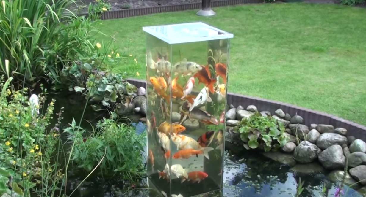 This crazy fish riddle is confusing people on the internet for Fish tank riddle