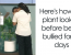 IKEA Asks People To Bully This Plant For 30 Days To See What Happens, And Results Are Eyeopening (12 Pics + VIDEO)